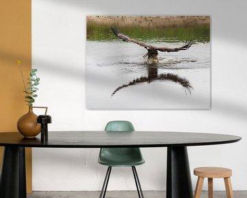 Europäischer Seeadler von Loek Lobel