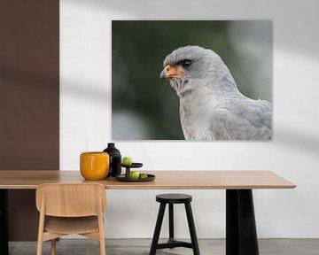 Falke des Liedes von Loek Lobel