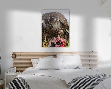 Finnischer Falke von Loek Lobel