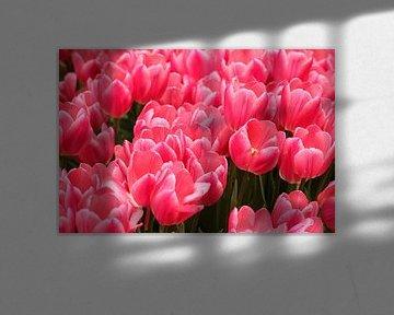 Rosa Blumen in schöner Blüte von Jennifer Hendriks