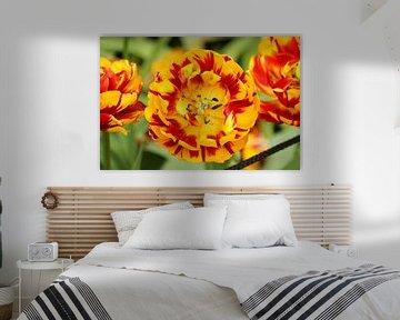 Eine rot-gelbe Blume in Blütezeit von Jennifer Hendriks