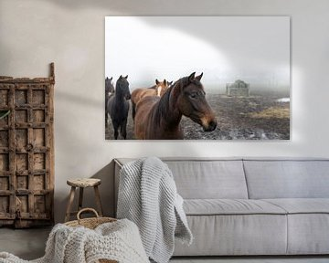 Pferde im Nebel von Ger Beekes