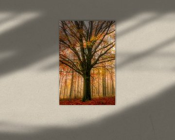 Autumn tree van Thomas Jansen