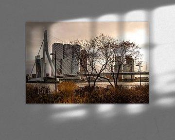 Rotterdam, zicht op de Erasmusbrug vanaf de Boompjeskade van Ingrid Aanen