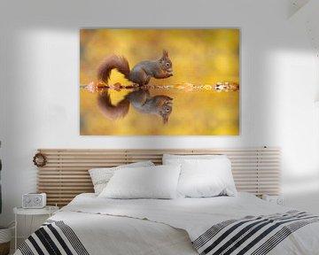 Herfst Eekhoorn van Dick van Duijn