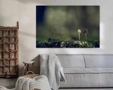 Herbstszenen 2019 von Hans Lunenburg