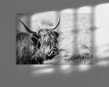 Schotse Hooglander van Nathalie Bauland