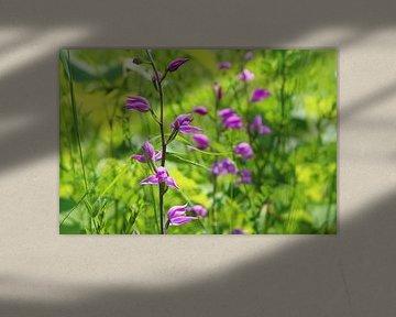 Wild Orchid Red Woodland Bird entouré de vert vif sur Ines Porada