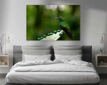 Kupferkopf Smaragdkolibri von Sander van Gorp