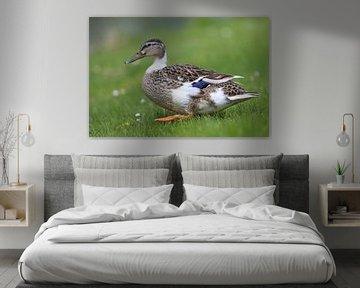 Eine Ente, die auf dem Gras herumläuft. von Jennifer Hendriks