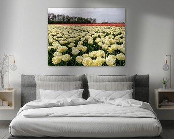 Witte en Rode tulpen van Yvon van der Wijk