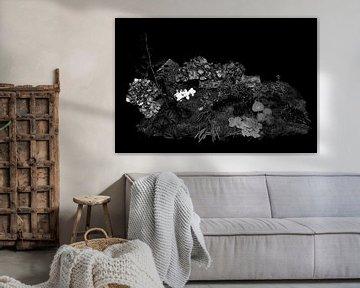 Herfst in zwart wit van Jan Tuns