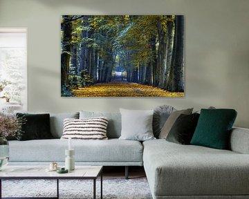 Herfst bladeren in Bergen van Marc Hollenberg