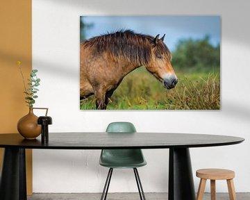 Portret van een Exmoor pony