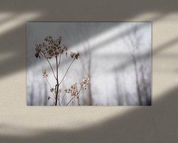 Einfachheit und Nüchternheit von Petra Brouwer