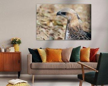 Raubvogel Sri Lanka von Alyssa Alsemgeest