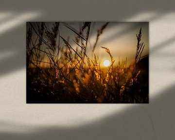 Tegenlicht serie van warme kleuren deel 6 van Alex Hiemstra