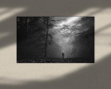 Misty forest walk van Thomas Kuipers