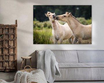 Küssende Fohlen in Spring Virtue von Isabel van Veen