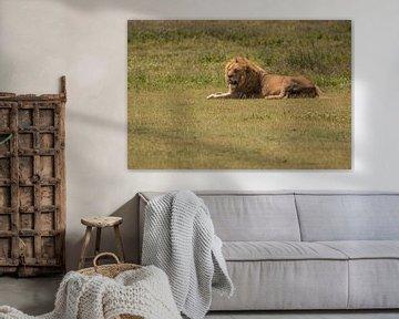 lonely lion van Menno Selles