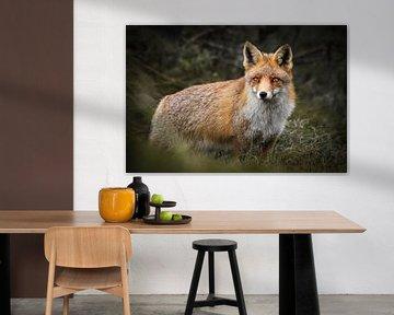 Fuchs in den Amsterdamer Wasserversorgungsdünen von Isabel van Veen