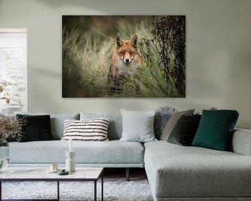 Neugieriger Fuchs in den Dünen der Wasserversorgung von Isabel van Veen