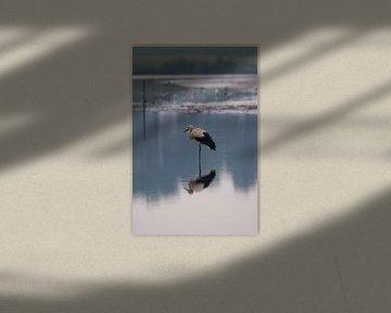 Storch macht Yoga von Menno Selles