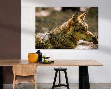 Wolf von Menno Selles