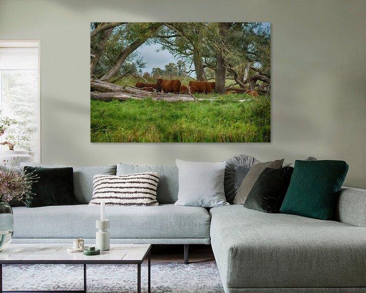 Sfeerimpressie: Hooglanders in de Biesbosch van FotoGraaG Hanneke