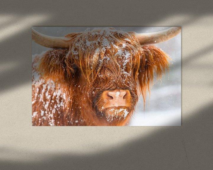 Impression: Bétail Highland écossais dans la neige sur Sjoerd van der Wal