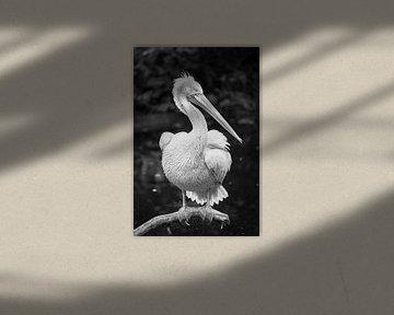 Pelikan in schwarz-weiß von Evelien Oerlemans