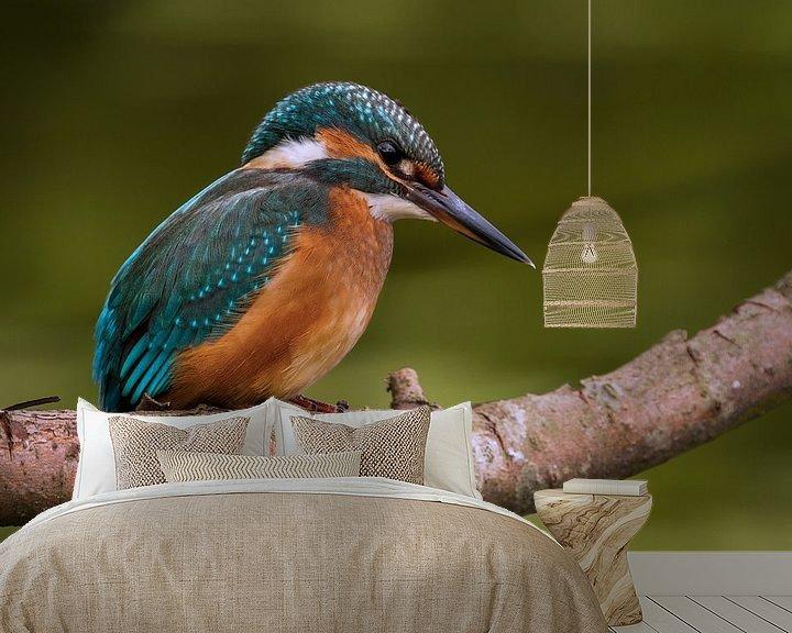 Sfeerimpressie behang: IJsvogel op een tak van Paul Wendels