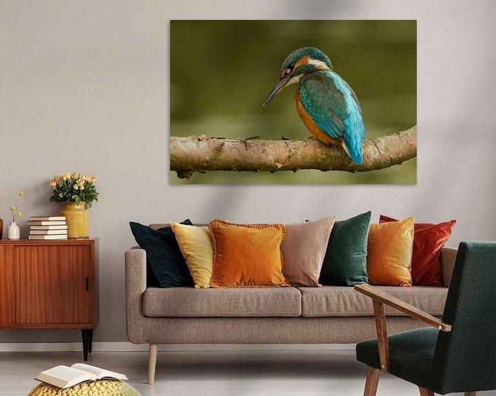 Sfeerimpressie: IJsvogel op een tak van Paul Wendels