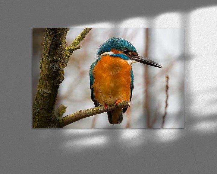 Sfeerimpressie: IJsvogel in de boom van Paul Wendels