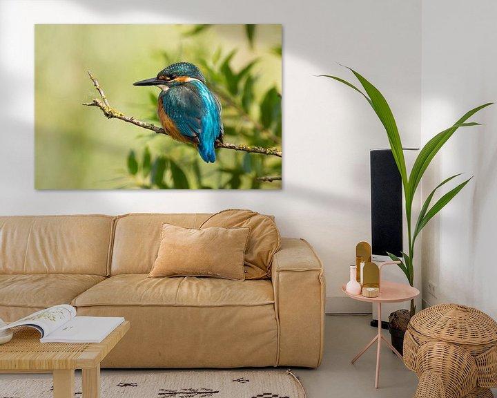 Sfeerimpressie: IJsvogel op een tak. van Paul Wendels