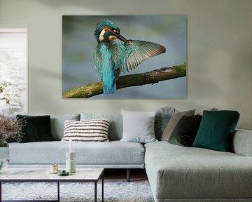 Eisvogel reinigt seinen Flügel. von Paul Wendels