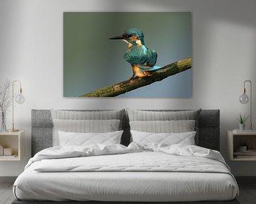 Eisvogel auf einem Stock.