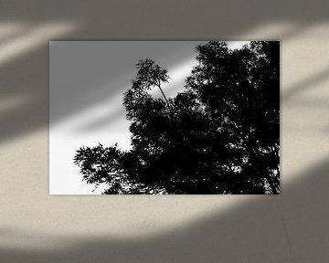Baum von Dianthe Forkink
