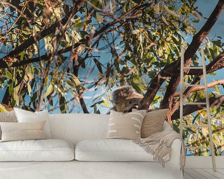 Beispiel fototapete: Koala im Baum von Bob Beckers