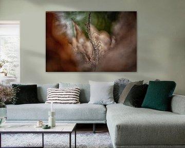 Abstracte natuur fotografie van ingrid schot