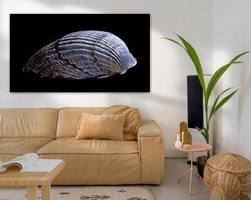 Nummer 2 der Nordseemuscheln von Studio de Waay