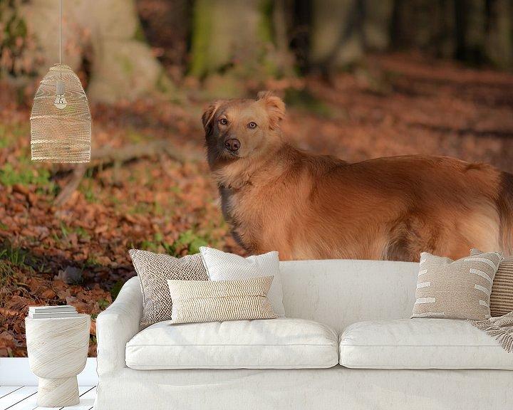 Beispiel fototapete: brauner Hund von Tania Perneel