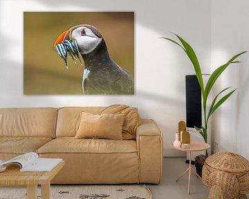 Papageientaucher-Porträt von Rudmer Zwerver