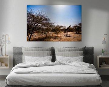 Giraffe in Senegal Afrika van Babet Trommelen