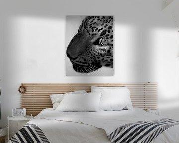 Nahaufnahme Sri Lanka Leopard von Patrick van Bakkum