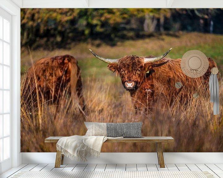 Beispiel fototapete: Zwei schottische Highlander schnüffeln herum. von Bas Fransen