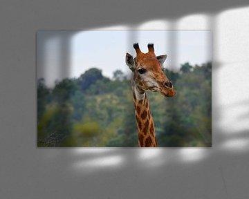 Giraffe in Farbe von Dustin Musch