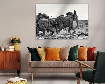 Afrikaans olifanten (Loxodonta-africana) drinken en spelen in het water van Tjeerd Kruse