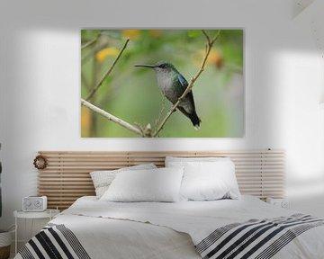 Kolibri in El Dorado, Sierra Neveda von Anneke Ruys