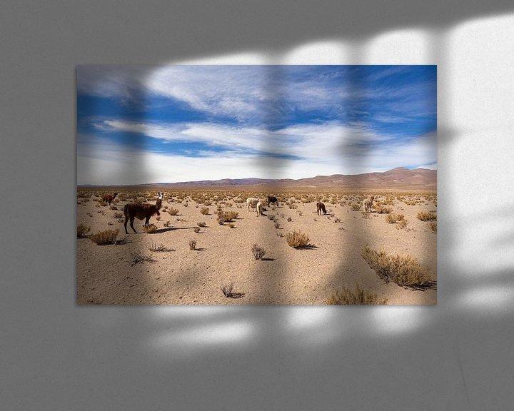Beispiel: Lamas in der Wüste von Merijn Geurts